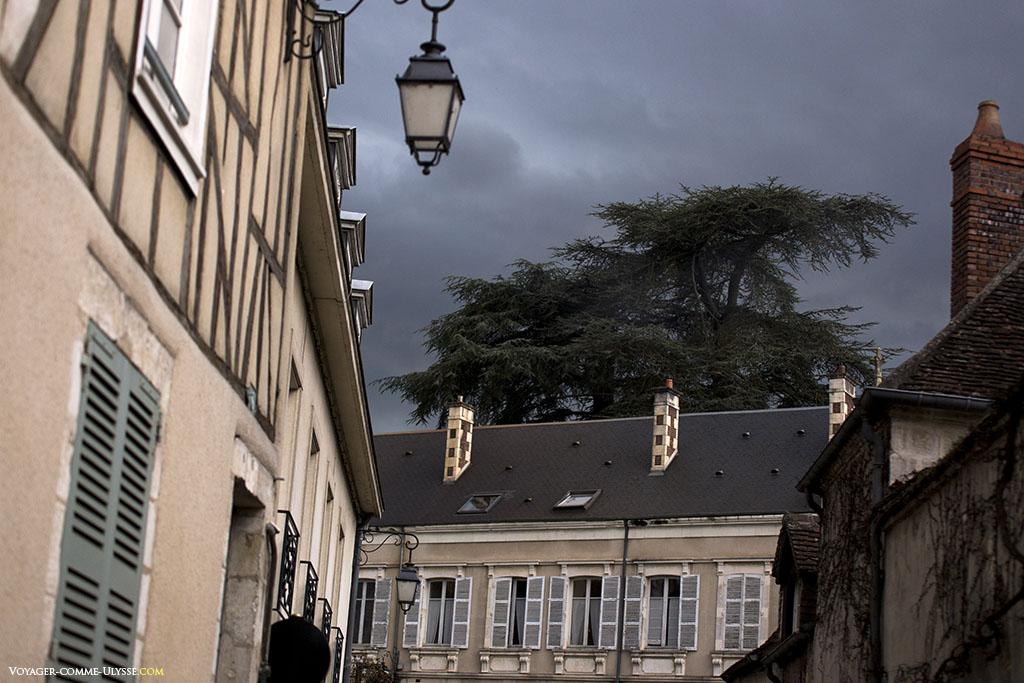 Un cèdre majestueux domine les vieilles maisons.