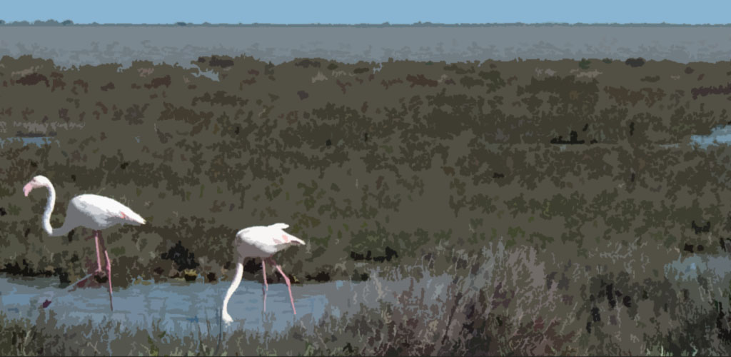 Photos HD de Camargue