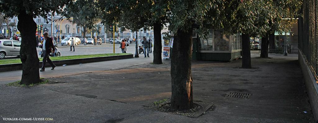 Grilles de protection des arbres