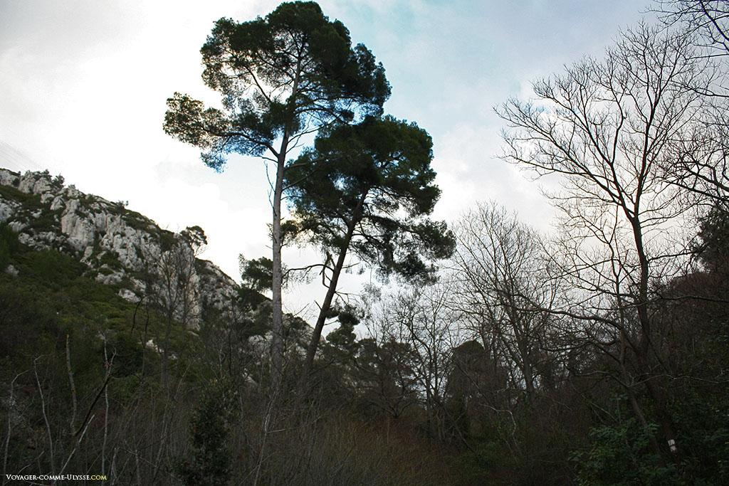 Les arbres et la pierre, paysages de Provence