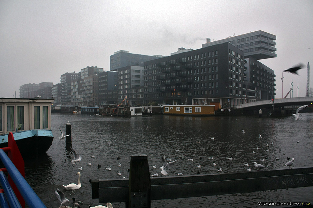 Les autres habitants des canaux d'Amsterdam : les oiseaux.