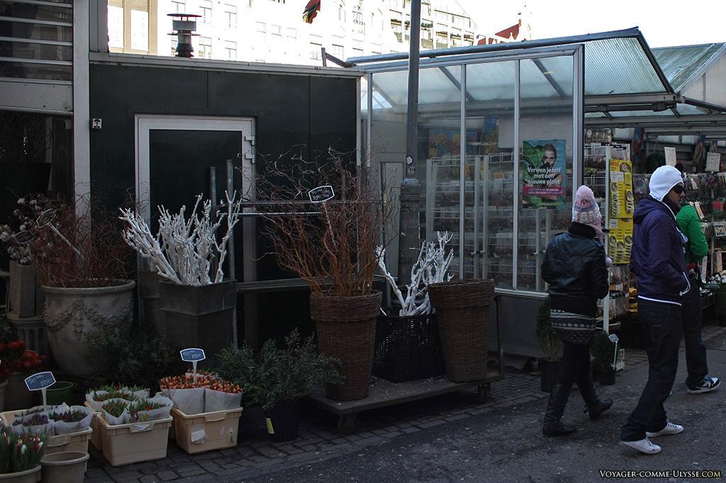 La période de Noël débutait, expliquant ces plantes blanches étranges...