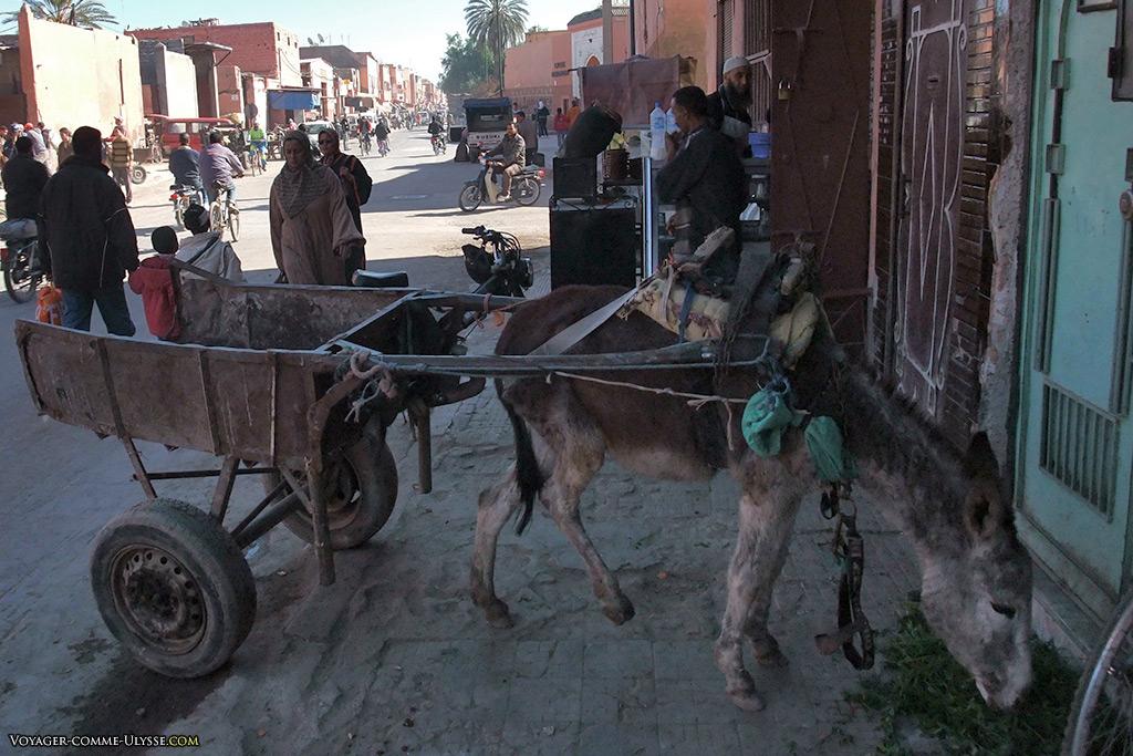 L'avantage de l'âne, c'est qu'il n'est pas très cher à nourrir.