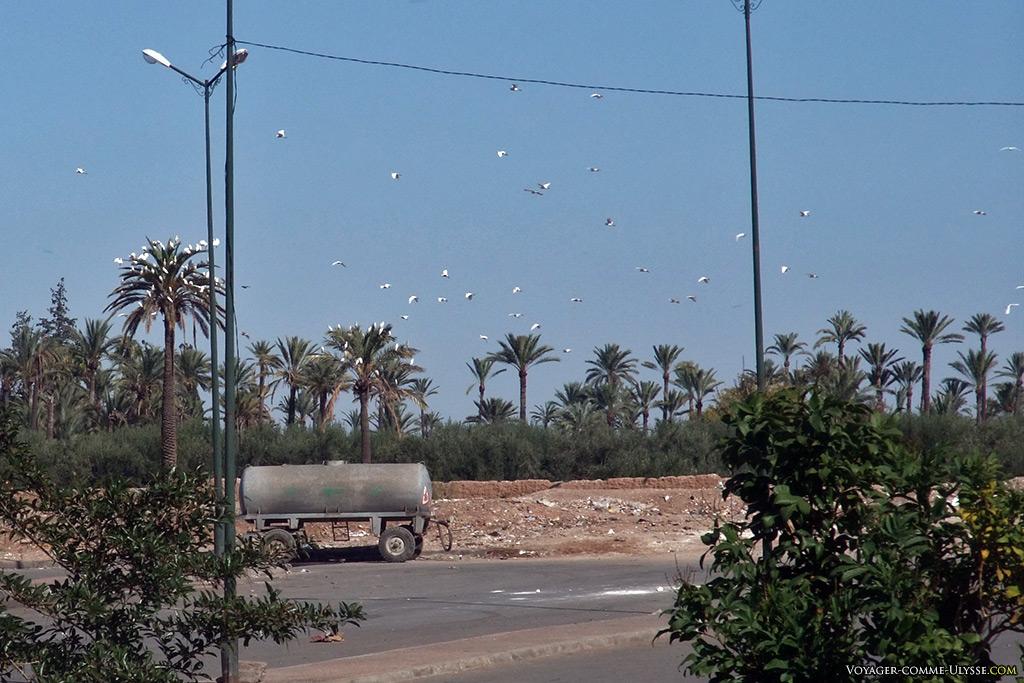 Marrakech, oasis aussi pour les oiseaux.