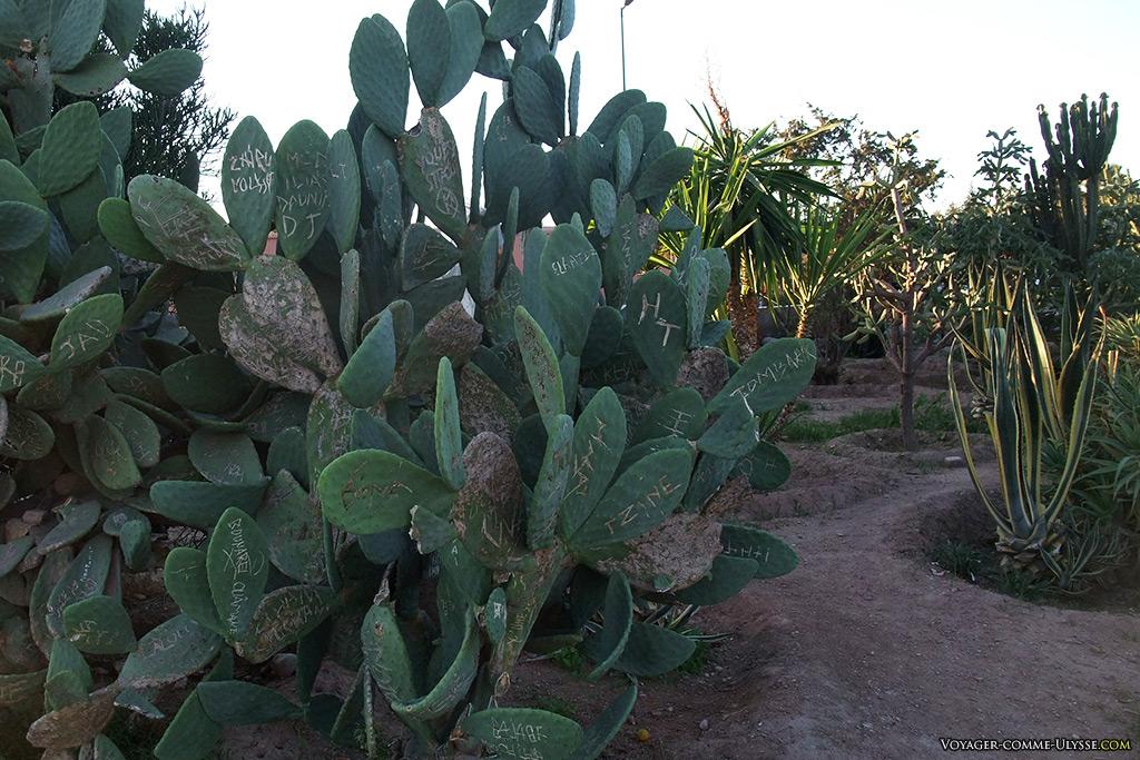 On écrit sur les cactus.