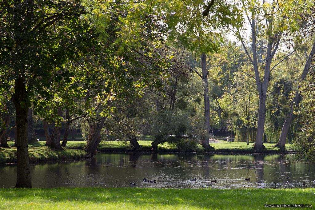 Les canards barbotent dans l'eau des Jardins.