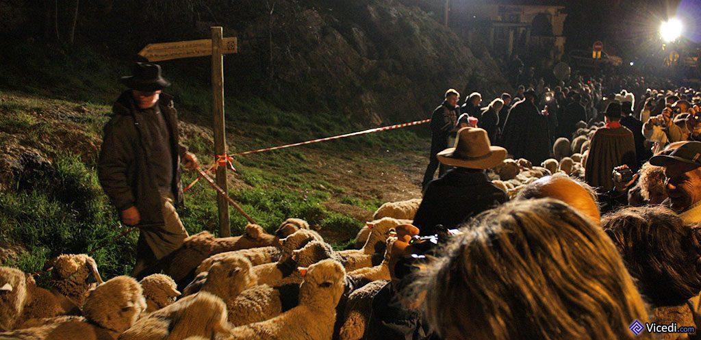 Voici les bergers qui arrivent, venus voir l'enfant Jésus. Il s'agit de véritables bergers et de véritables moutons!