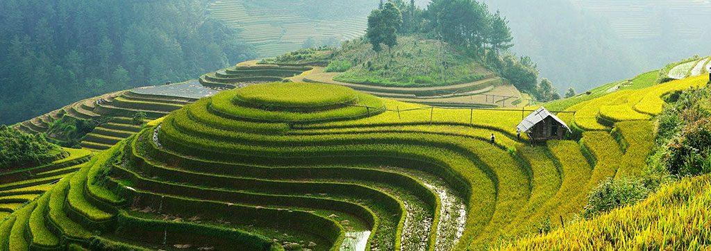 Les rizières d'Asie, merveilles de la Nature façonnée par l'homme !