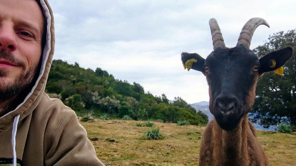 Les chèvres sont ici dans leur élément...